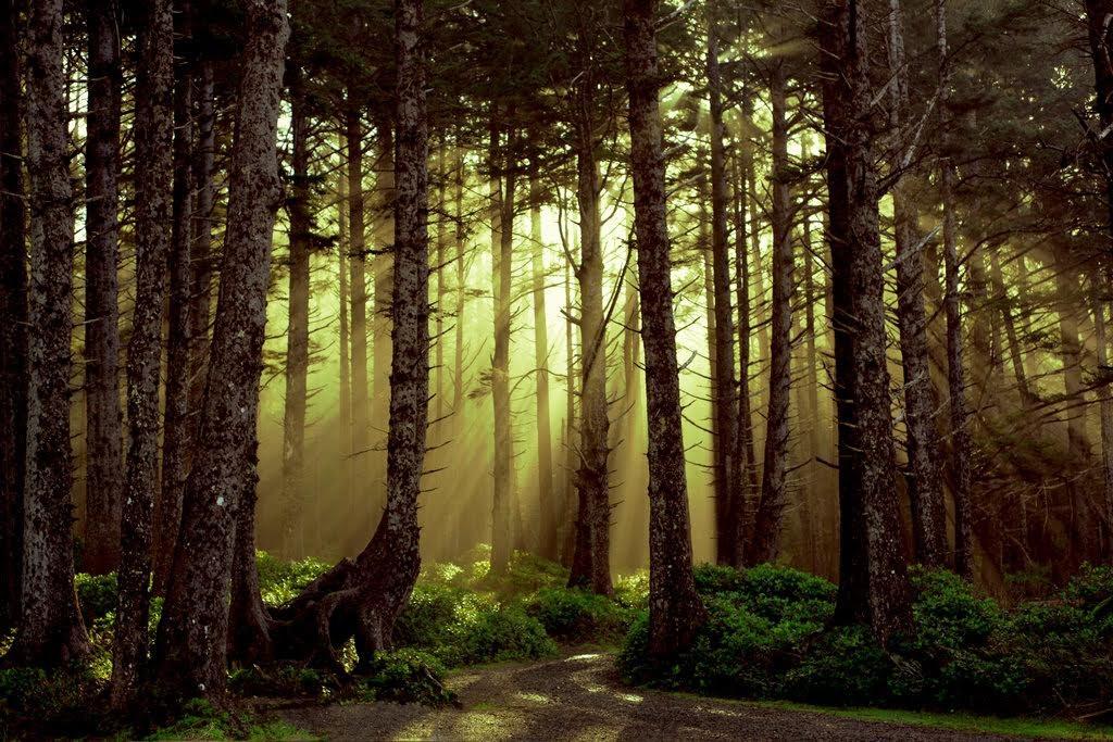 El bosque de los dioses - El cristianismo en The Legend of Zelda